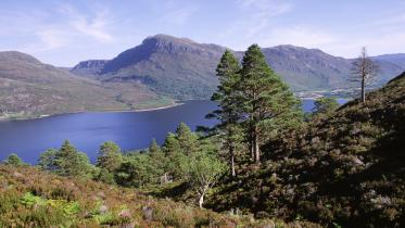 View over Scots pines and Loch Maree from the mountain trail, Beinn Eighe NNR, West Highland Area. ©Lorne Gill/SNH. For information on reproduction rights contact the Scottish Natural Heritage Image Library on Tel. 01738 444177 or www.nature.scot