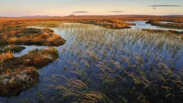 Dubh locahn and blanket bog looking splendid in the setting sun (Flows NNR, Forsinard). ©Lorne Gill/SNH/2020VISION. For information on reproduction rights contact the Scottish Natural Heritage Image Library on Tel. 01738 444177 or www.nature.scot
