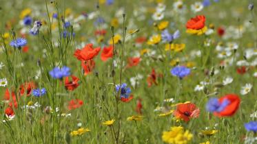 Wildflowers. ©Lorne Gill/SNH. For information on reproduction rights contact the Scottish Natural Heritage Image Library on Tel. 01738 444177 or www.nature.scot
