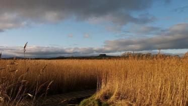 Caerlaverock NNR winter view from willow seating area to Wardlaw, ©Suzanne McIntyre. For information on reproduction rights con