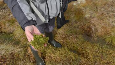 someone holding sphagnum moss