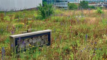 Green roofs, Meadowbank site